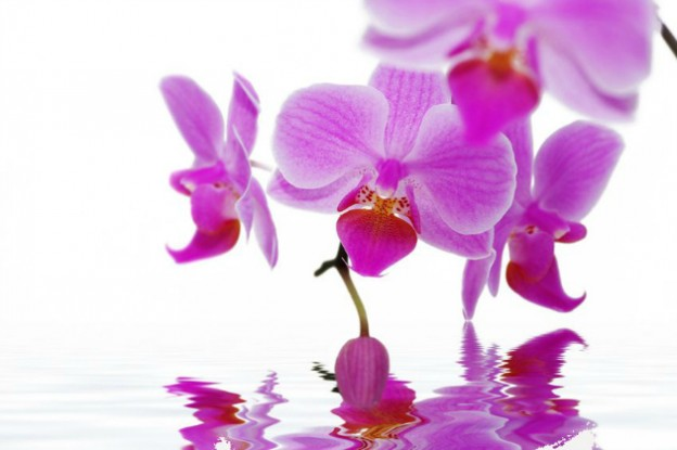 Radiant-Orchid-2014-Color-of-the-Year